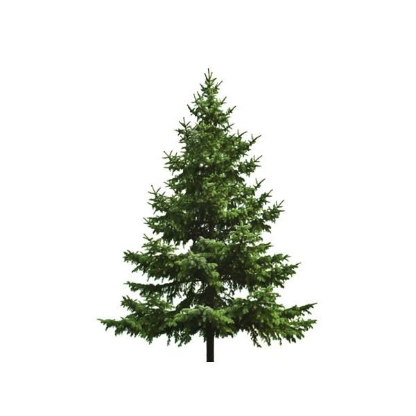 Картинка для детей елка большая и маленькая